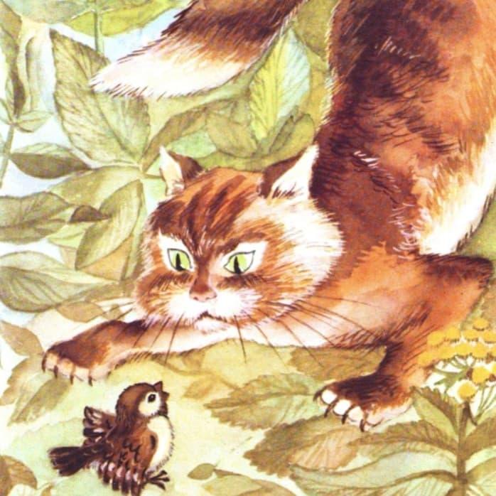 Кот рассказ Пришвина